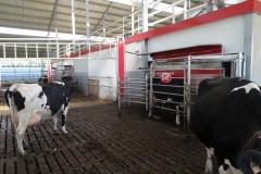 Melkveebedrijf LV Guns- Van Den Broeck uit Kasterlee